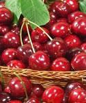 cherries_2011
